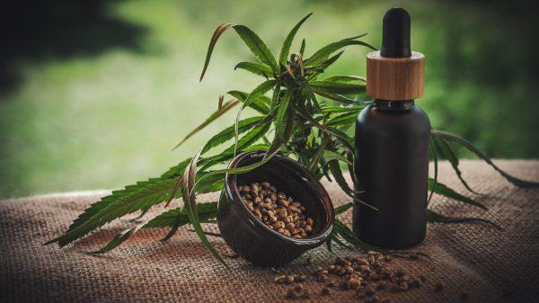 diferencias aceite cañamo y marihuana