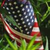 Legalización de la marihuana en mas estados de USA