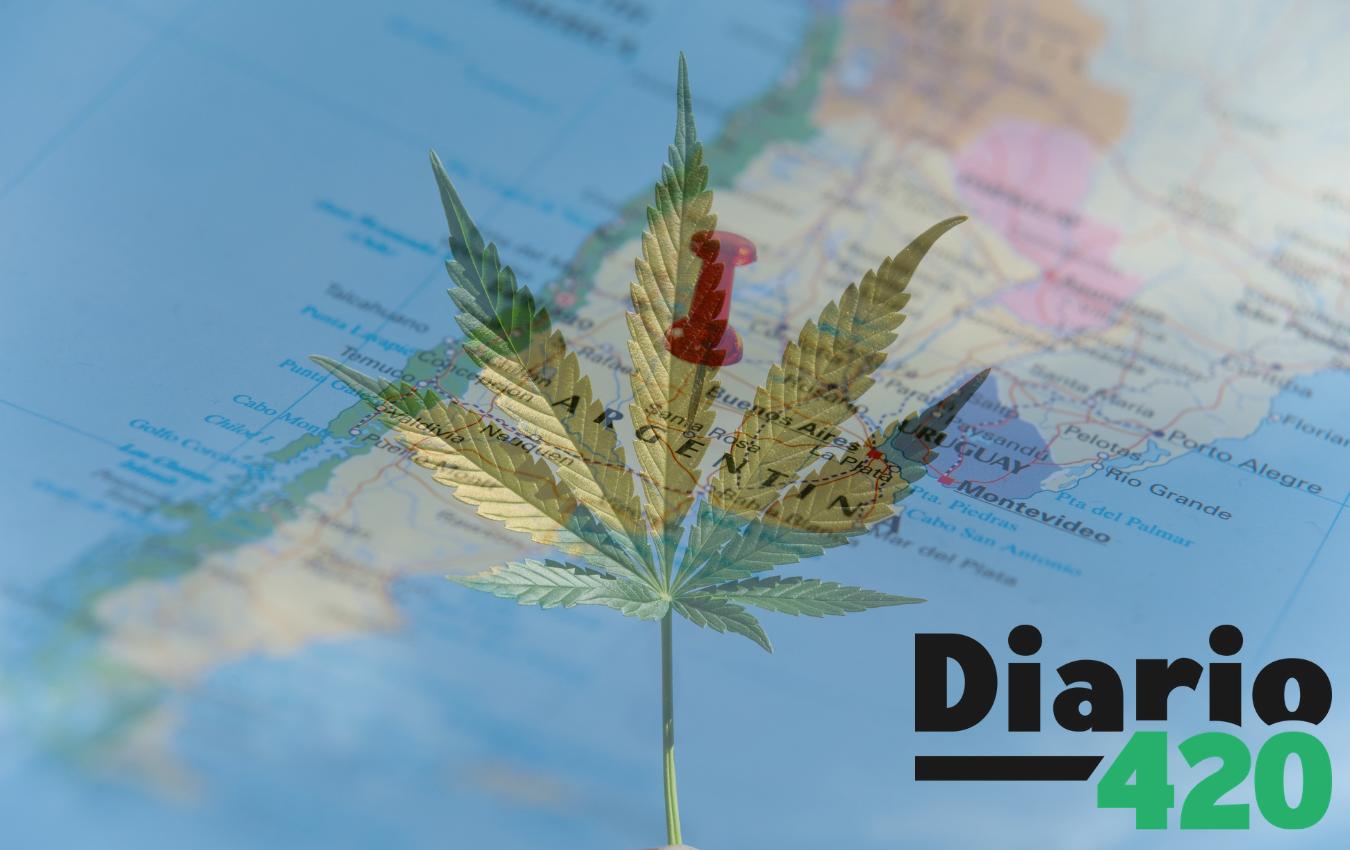Argentina asiste a la legalización de la marihuana para uso medicinal