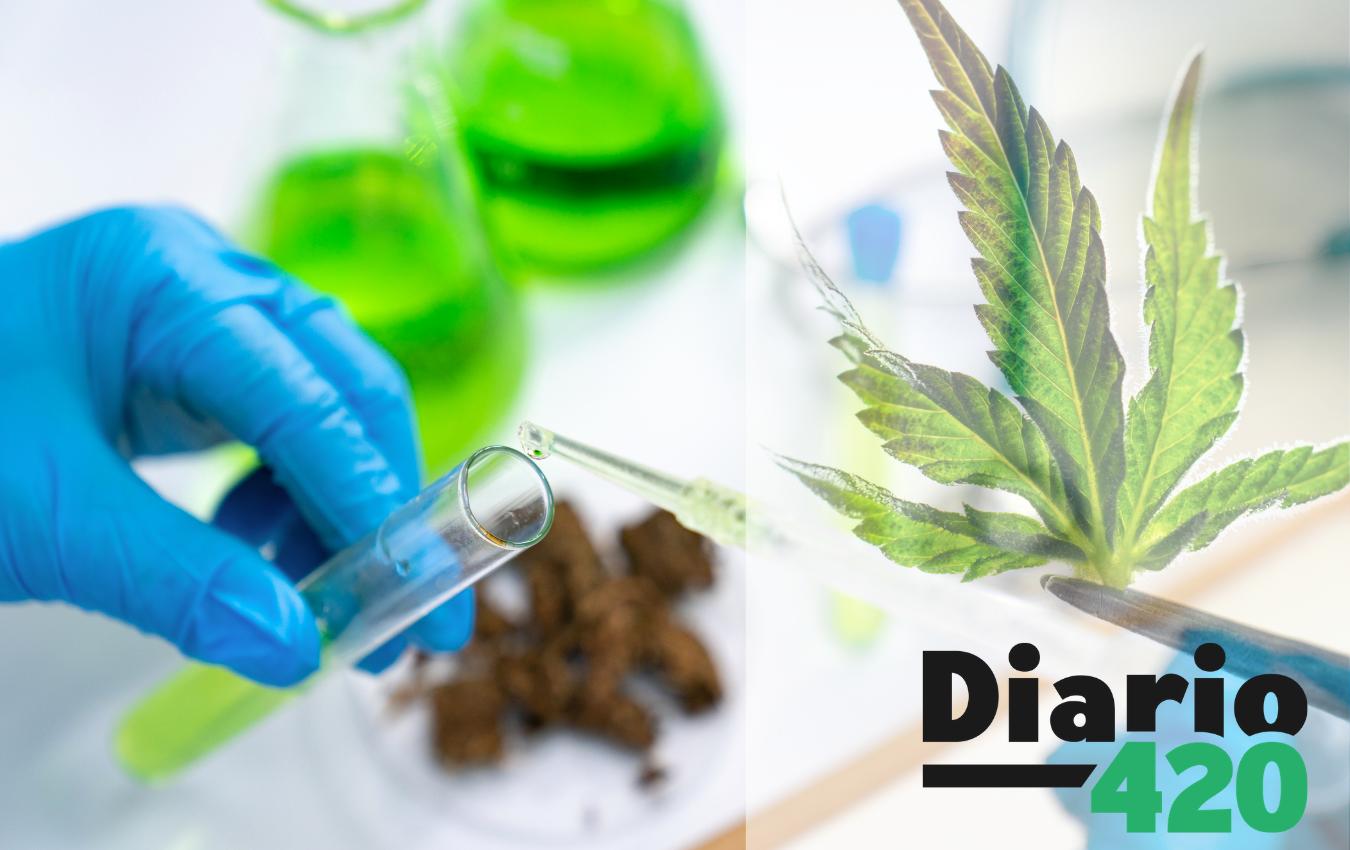 Método científico para determinar el origen de cada planta de cannabis