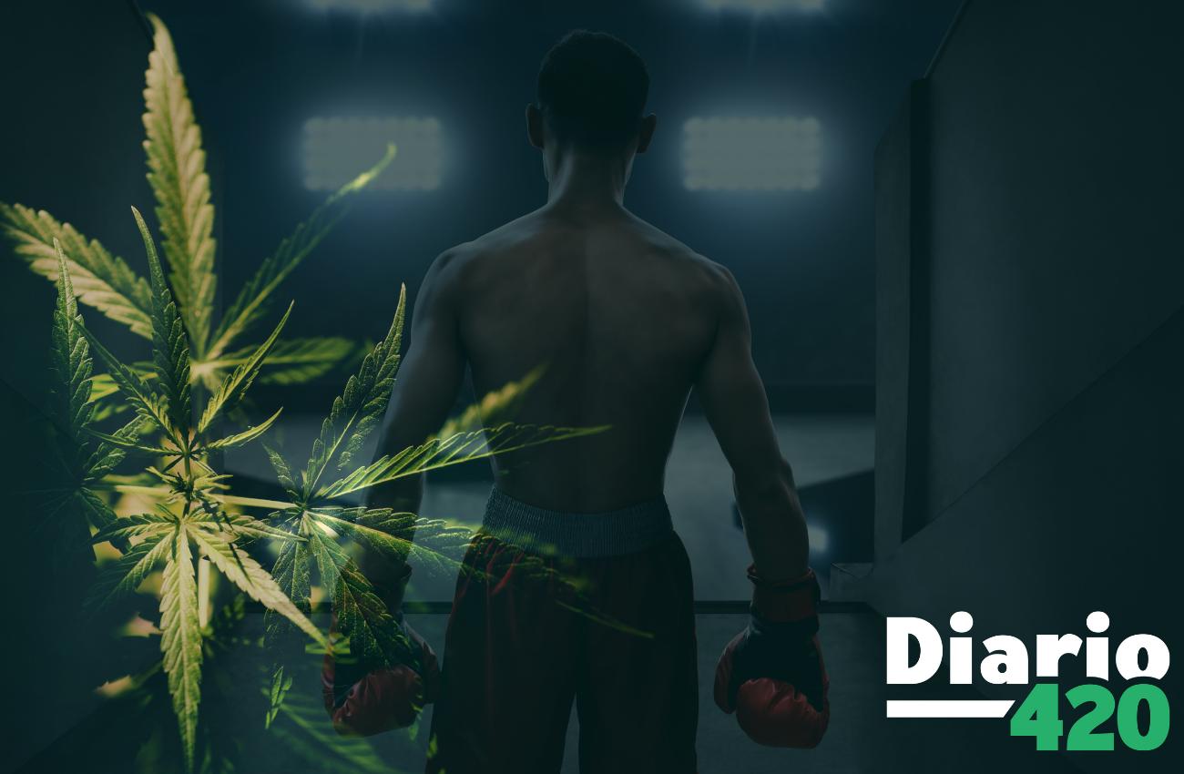 Tyson Ranch despunta en el imperio de la marihuana de la mano de Mike Tyson
