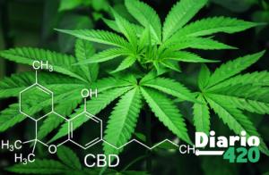 Laboratorio Español el origen de cada planta de cannabis