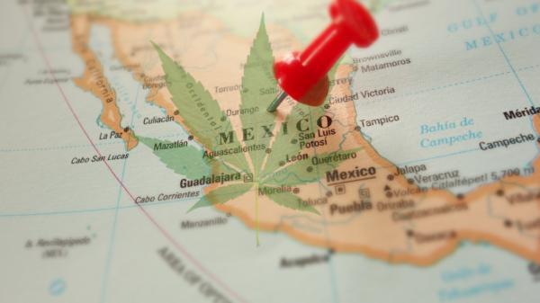 México se prepara para legalizar la marihuana para uso recreativo tras su aprobación para uso medicinal