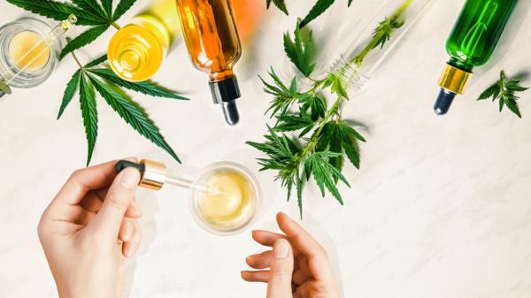 El aceite de semillas de marihuana atesora múltiples beneficios médicos