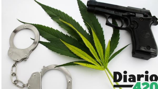 La legalización del cannabis traería un menor índice de asesinatos y robos