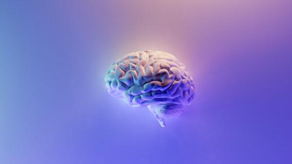 Efectos del CBD en el cerebro