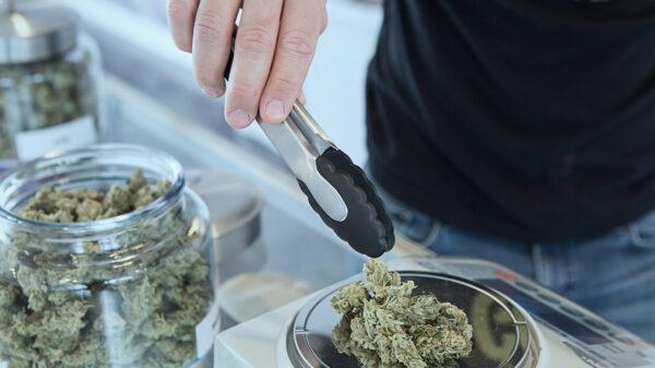 Trabajos ofertados de la industria del cannabis en USA